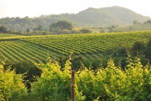 Wine-tasting in an organic wine cellar